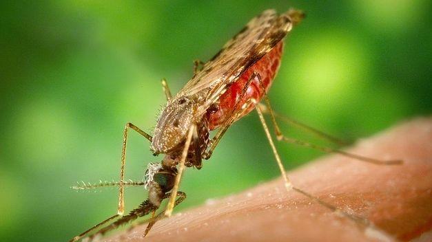Los insectos hembra son los que más pican en verano