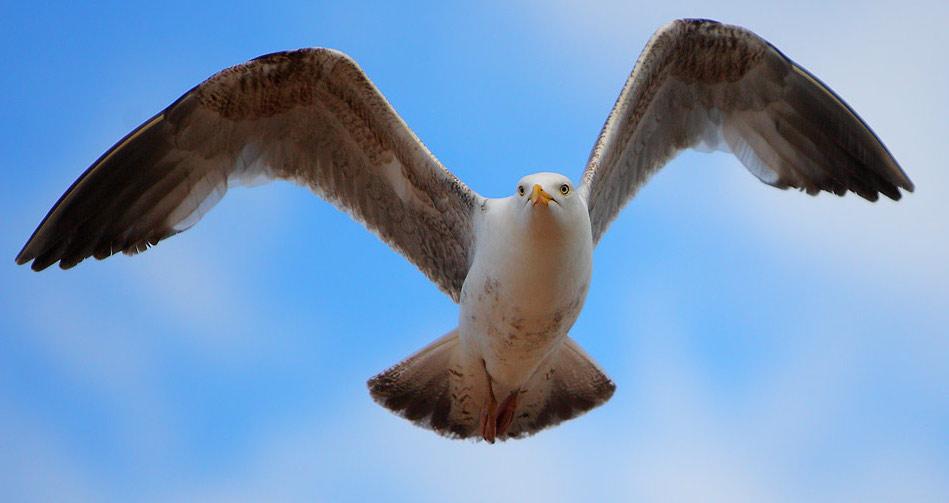 Las aves: efectivos plaguicidas naturales
