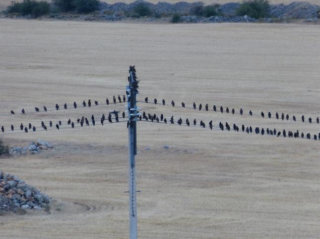 La población actual de aves transporta un virus similar al de la gripe española
