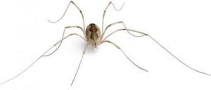 El veneno de araña, perfecto para fabricar pesticidas