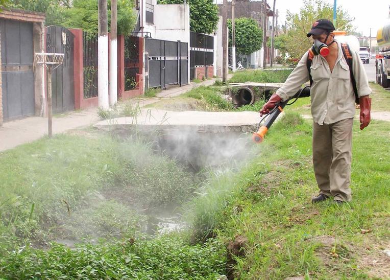 El Consell asegura que fumigar es solo competencia municipal