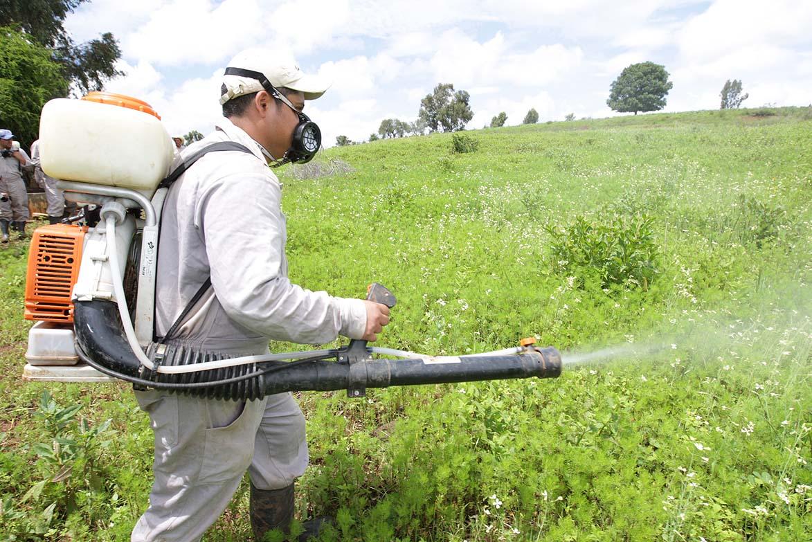 Demuestran que los plaguicidas sistémicos son una amenaza para la biodiversidad