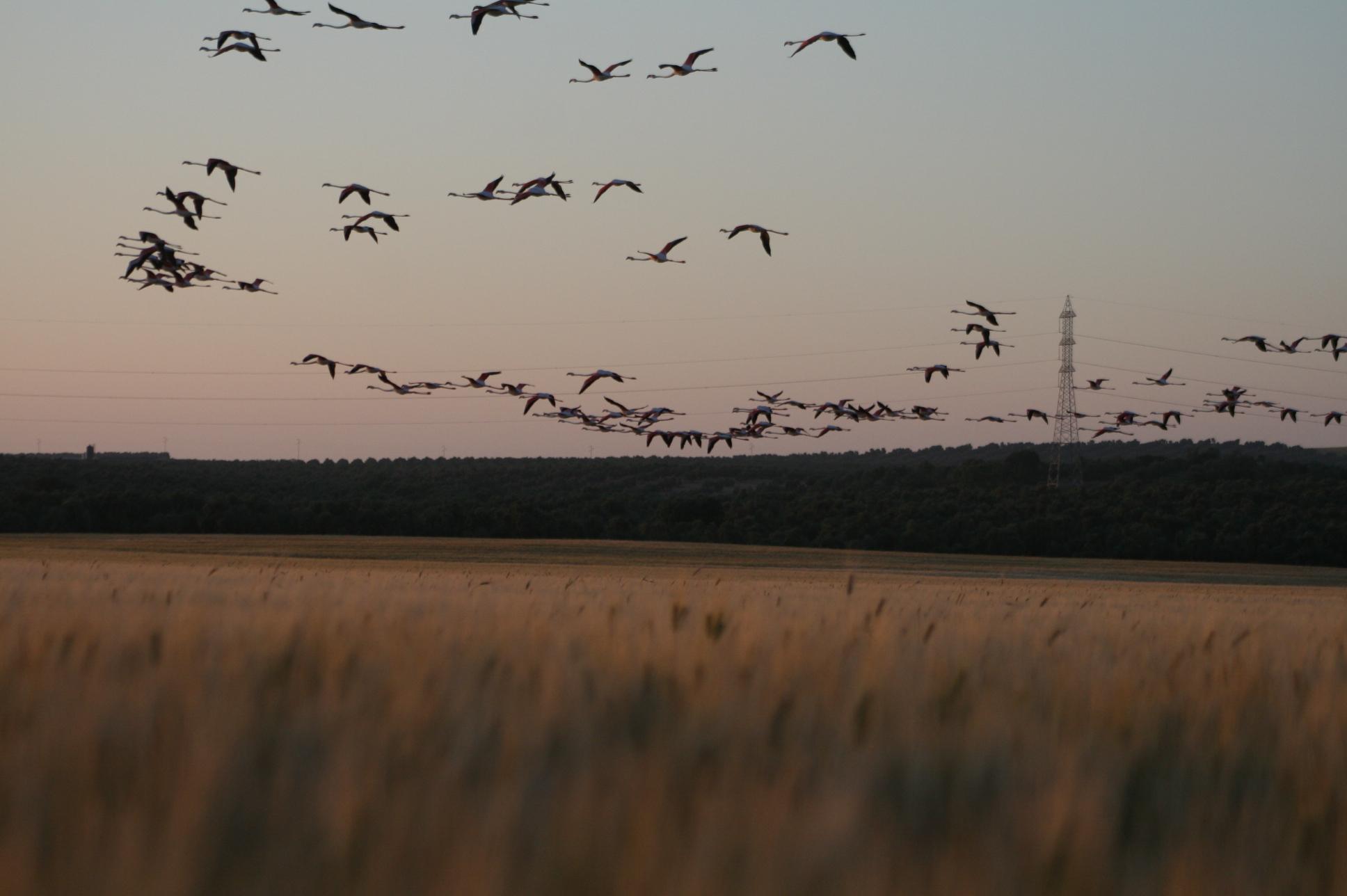 Patentan un dron biomimético para luchar contra las plagas aviares