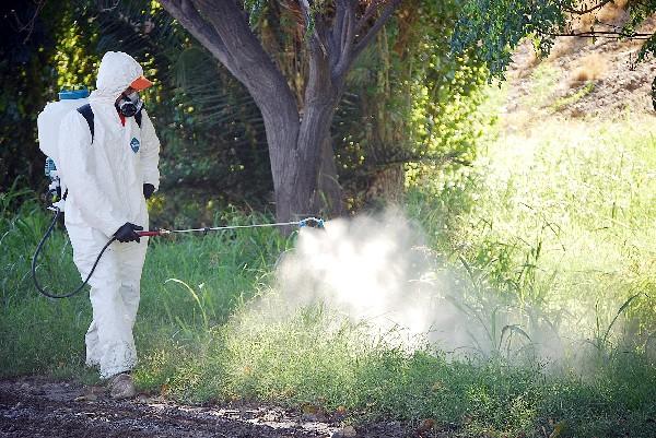 El Ayuntamiento de Almería declara la guerra a los mosquitos.