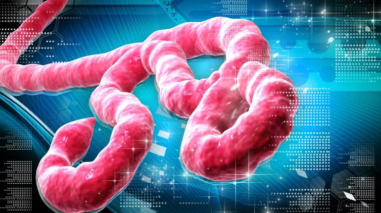 El ébola supera ya los 25.000 contagios
