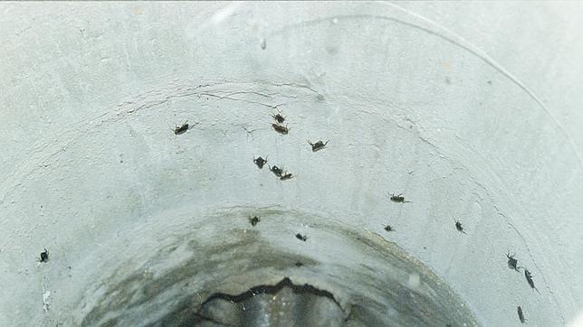 El 50% de las plagas en Andalucía son de cucarachas.