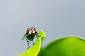 Tratamientos para el control de moscas