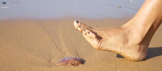 Picaduras de medusas: ¿Cuál es el mejor tratamiento?