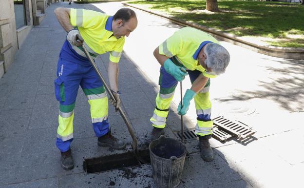 El Ayuntamiento finaliza el plan de control de las cucarachas en Málaga