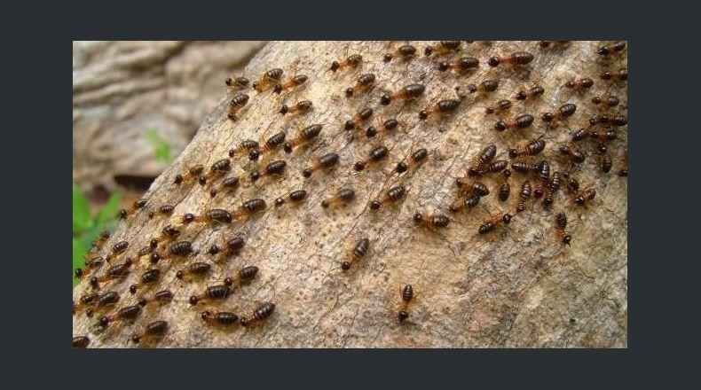 La aparición de plagas, un problema muy serio a tener en cuenta por todas las empresas