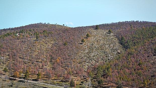 La Junta, incapaz de controlar las «imparables» plagas masivas en bosques de Granada