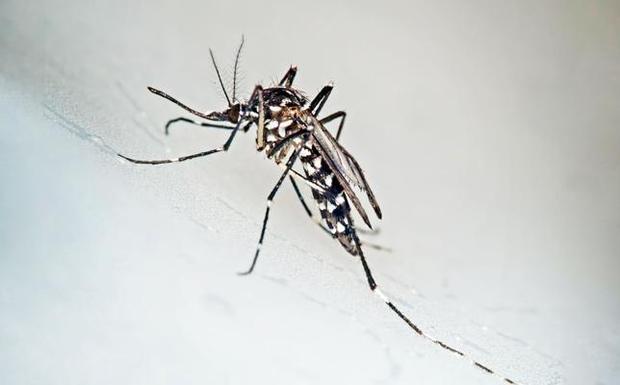 El mosquito tigre y las plagas de ratas obligan a subir el gasto destinado a los tratamientos