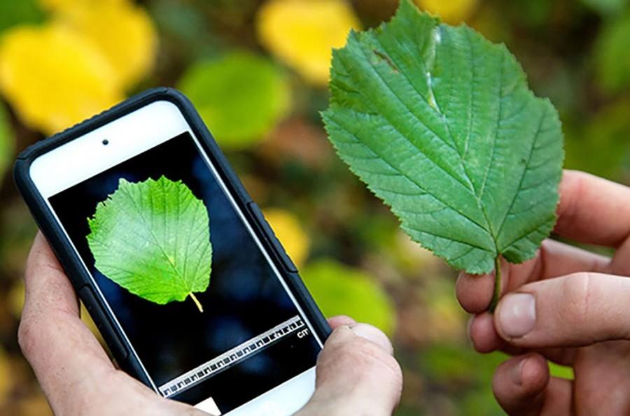 Plagapp, una herramienta para reconocer plagas en cultivos con el móvil