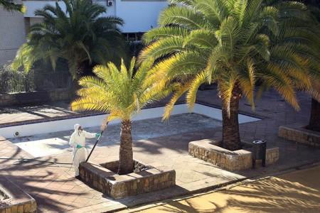 Marbella pone en marcha un tratamiento fitosanitario para 500 palmeras