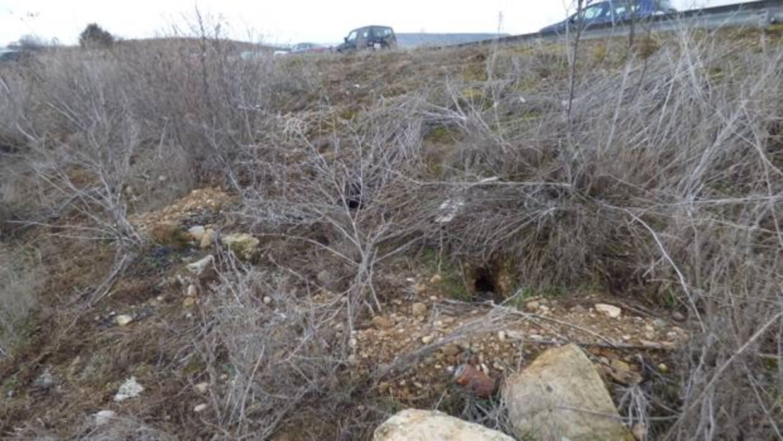 Alertan de daños en cultivos por plagas de conejos junto a las autovías y el AVE