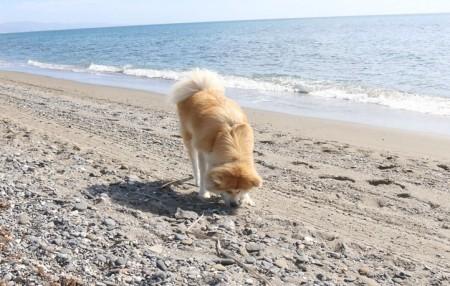 Indignación en Marbella: PP y OSP quieren sacrificar animales abandonados