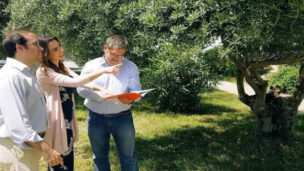 Cs reclama a la Diputación campañas para controlar las plagas de avispilla del castaño y del ébola del olivo