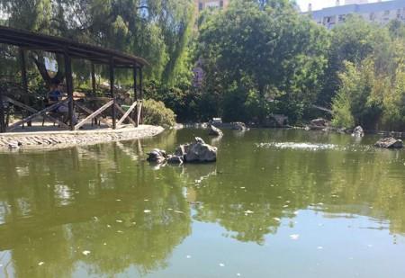 El PSOE reclama medidas contra la plaga de mosquitos en Marbella