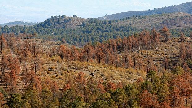 Las plagas avanzan por la Sierra de Los Filabres de Almería sin un plan de contención
