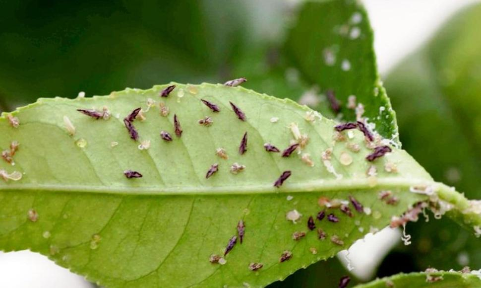 El cambio climático aumenta las plagas en los cultivos